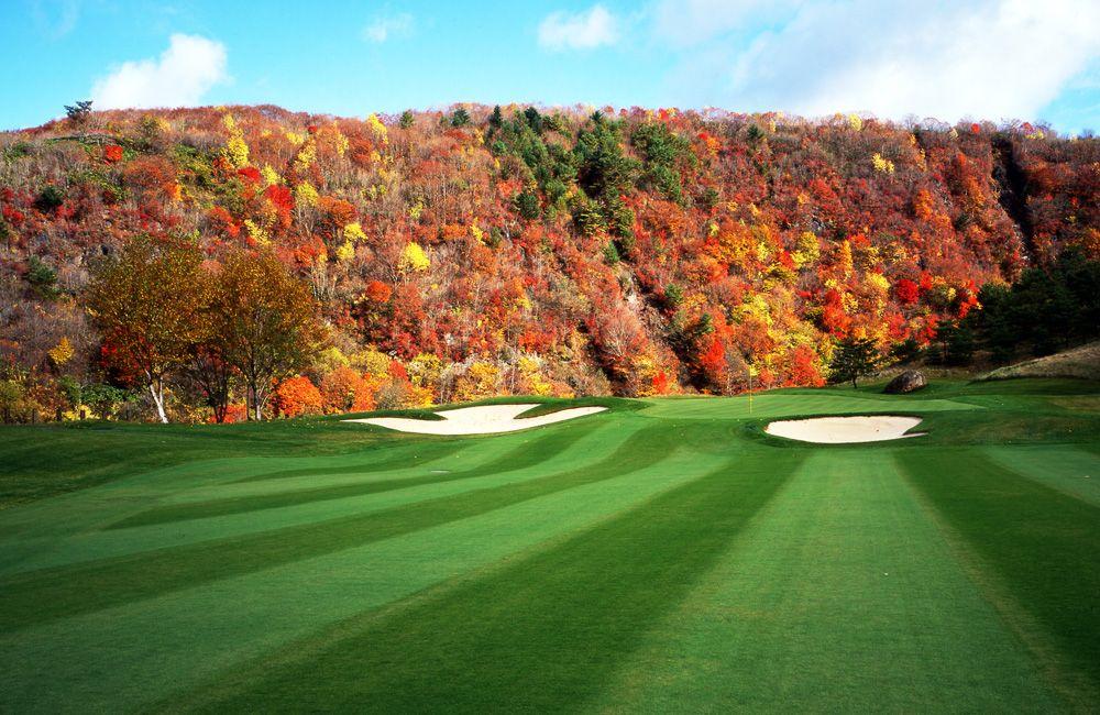 紅葉を背景とした緑との色合いが最高
